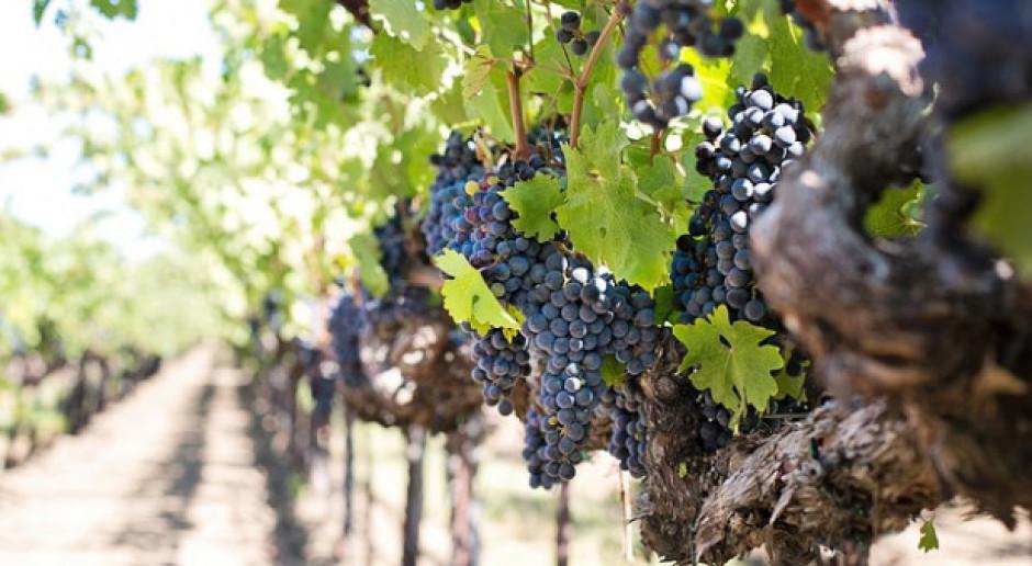 Zbliża się termin składania deklaracji dotyczących rynku wina