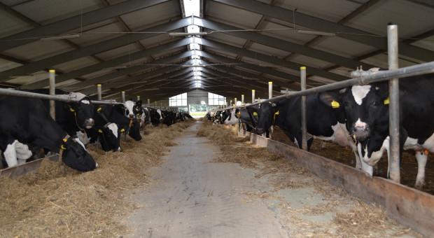 Rośnie produkcja mleka w USA
