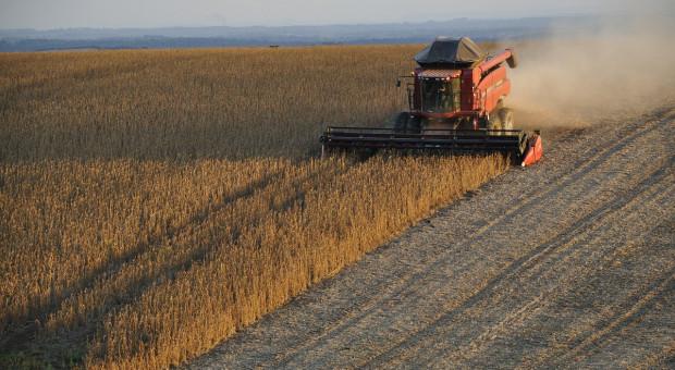 IGC: W październiku lekko spadła prognoza światowej produkcji soi