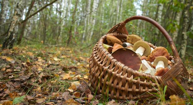 W lasach Europy zbieramy grzyby czy jagody warte ok. 23,3 mld euro rocznie