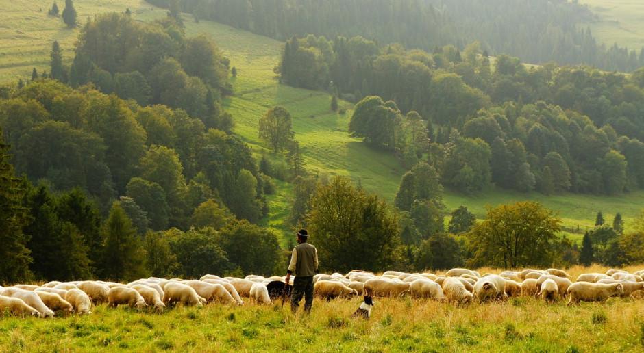 UE: Prognozowany wzrost produkcji baraniny o 0,1 proc.
