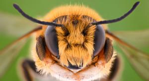 Uniwersyteckie Centrum Przyrodnicze stworzy wystawę edukacyjną o roli pszczół w przyrodzie