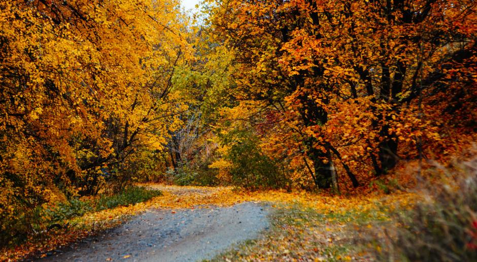 Jutro rozpocznie się astronomiczna jesień
