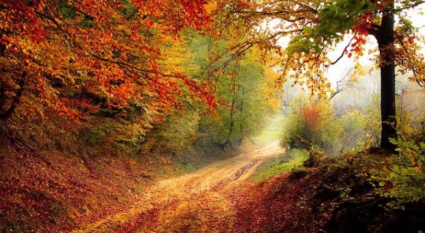 """Od 2019 r. """"Inwestycje zwiększające odporność ekosystemów leśnych i ich wartość dla środowiska"""" z PROW"""