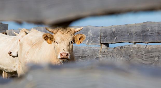 Francja chce ratować  przed spadkiem pogłowie zwierząt gospodarskich