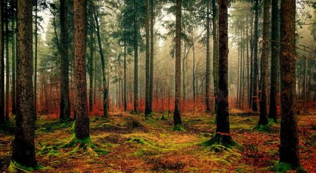 """Stare-nowe """"Wsparcie na zalesianie"""""""
