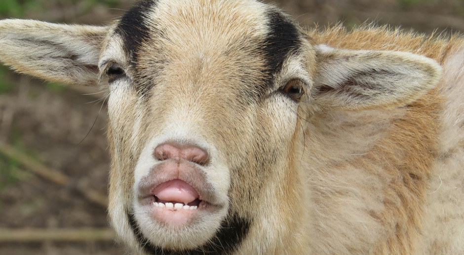 Księgi rejestracyjne bydła, świń, owiec lub kóz w... IRZPlus