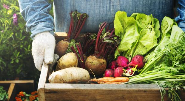 NCBR i KOWR podpisały umowę na dofinansowanie projektu platformy żywnościowej
