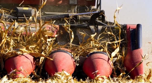 Ukraina: Do 1 listopada zebrano prawie 59 mln ton ziarna zbóż