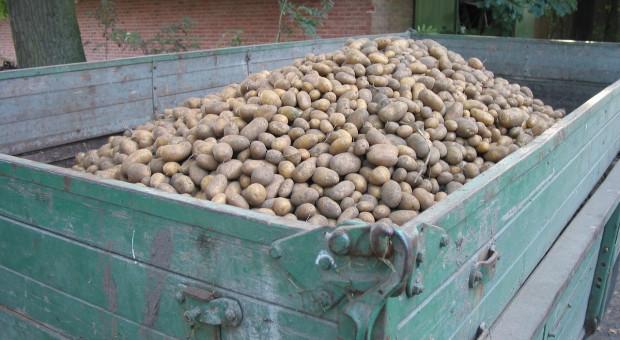 Rosja: Do 31 października zebrano 113,6 mln ton zboża