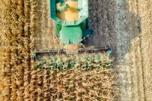 Kukurydziane żniwa dobiegają końca