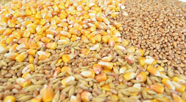 FAO: Kolejny wzrost prognozy światowej produkcji zbóż