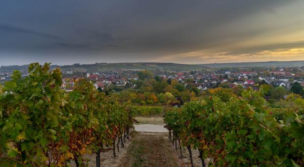 Copa-Cogeca o europejskim sektorze wina