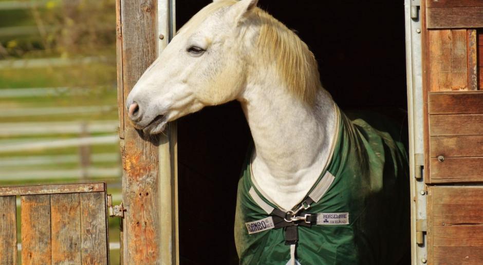 7 grudnia odbędzie się w Warszawie zimowa aukcja koni