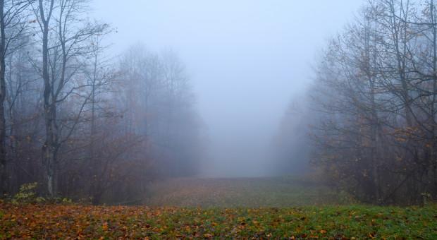 IMiGW ostrzega przed gęstą mgłą w siedmiu województwach