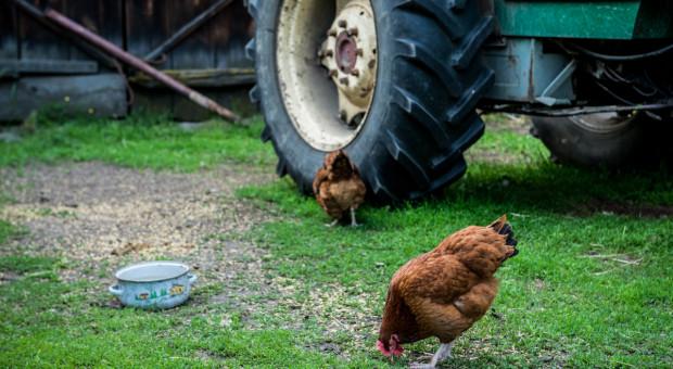 Sejm uchwalił ustawę o oddłużeniu gospodarstw rolnych