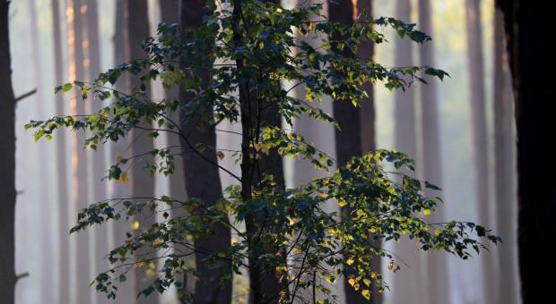 Zakaz wstępu do lasu będzie zdjęty, ale ścieżki edukacyjne, miejsca biwakowe - zamknięte