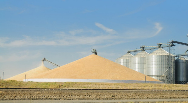 Ukraina: Do 13 listopada zebrano ponad 65 mln ton ziarna zbóż