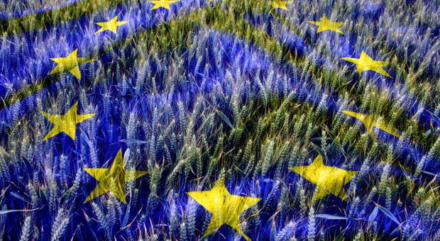 Komisja rolnictwa PE za nowymi zasadami organizacji rynków rolnych