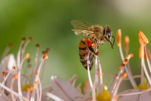 Zmiany w EFA: lasy zastąpione przez rośliny miododajne