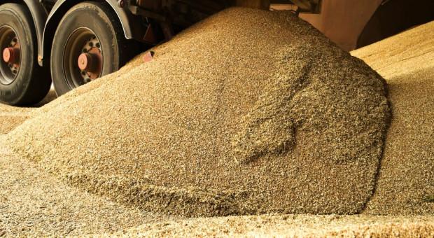 Pszenica i jęczmień znacznie podrożały, kukurydza jeszcze zbierana