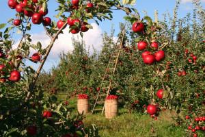 Większość pomocników rolnika to Ukraińcy