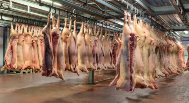 Niemcy: Ubito mniej świń
