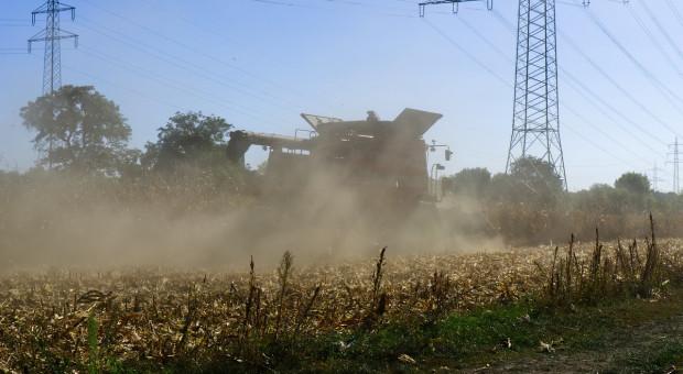 Rosja: Do 15 listopada zebrano ponad 115 mln ton zboża