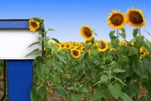 PE potwierdził kompromis w sprawie energii odnawialnej