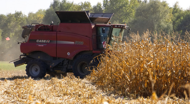 Ukraina: Do 19 listopada zebrano ponad 66 mln ton ziarna