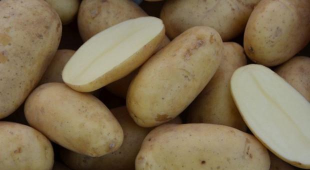 Popyt na ziemniaka dość wysoki, co z ceną?