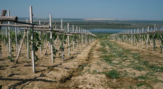 Rośnie import mołdawskich winogron