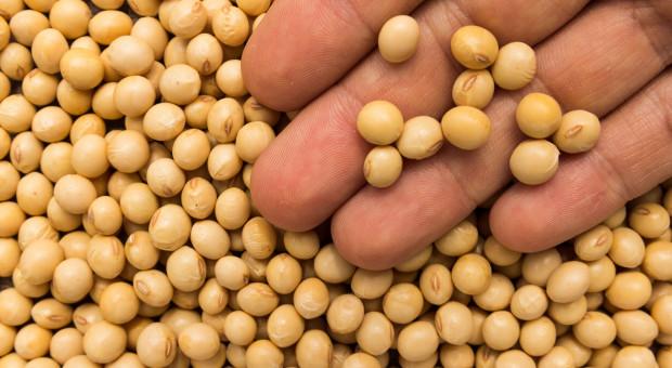 Pasze GMO znów jeszcze tylko dwa lata
