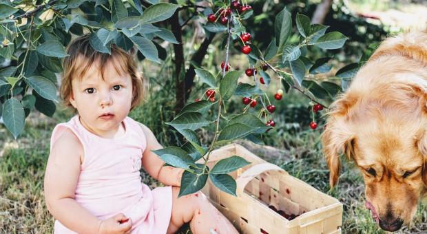 500 plus na pierwsze dziecko nie dla rolnika