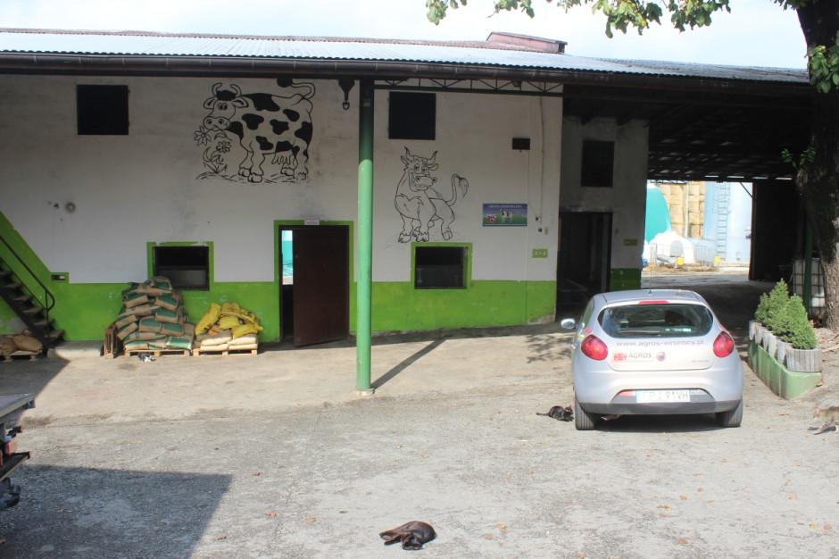 Ściany obory wcale nie muszą być nudne - tu zdobią je artystyczne dodatki, fot.kh