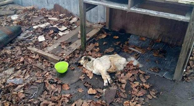 Jeden pies zdechł z głodu, drugi ledwo przeżył
