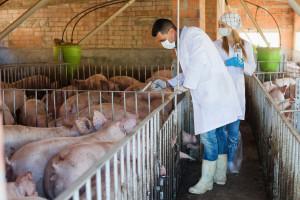 Ardanowski: Inspekcja Weterynaryjna odgrywa istotną rolę w rozwoju rolnictwa