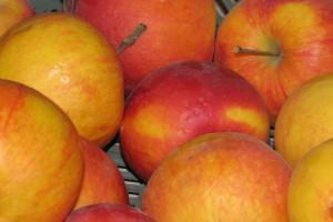 Badanie sadów – jakie odmiany najpopularniejsze?