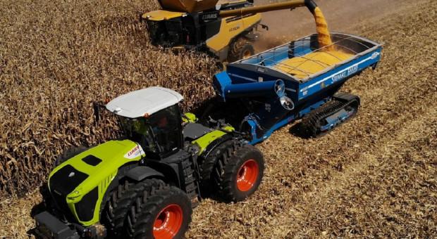 Podwójny rekord Guinessa w zbiorze kukurydzy