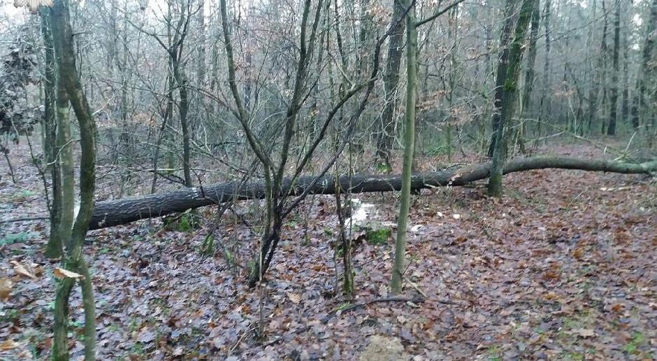Wypadek przy wycince drzew
