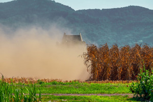 Rosja: Do 30 listopada zebrano 116,5 mln ton zbóż