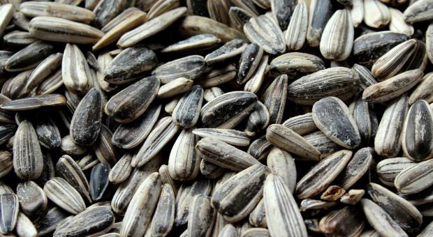 Rosja: Produkcja nasion oleistych szacowana na ponad 18 mln ton