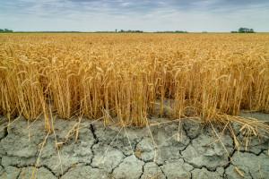 Ile jest, a ile będzie na pomoc po suszy?