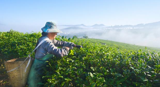 Chiny przyjęły plan walki z zanieczyszczeniem terenów wiejskich