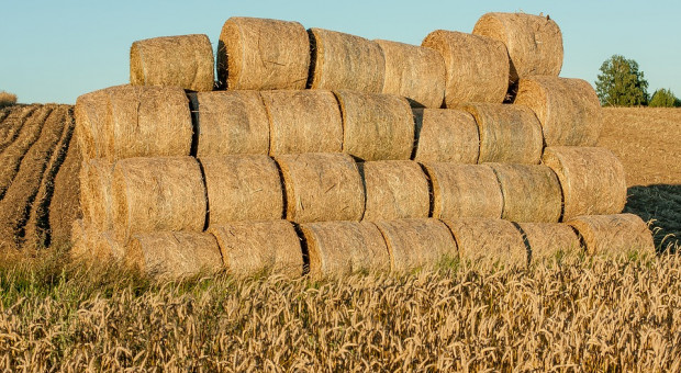 GUS: W rolnictwie ceny skupu rosnące i wyższe niż rok temu