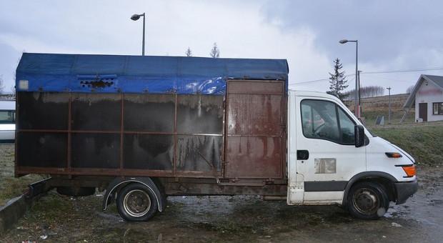 Rumuni odpowiedzą za znęcanie się nad końmi