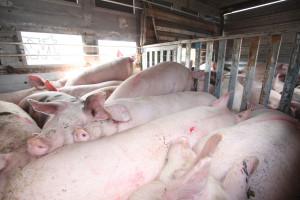 Ardanowski: Uzgodniliśmy z ministrem rolnictwa Litwy przywrócenie handlu świniami