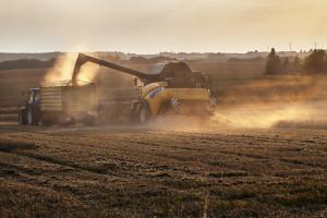 W 2018 r. Ukraina zwiększyła produkcję nasion oleistych
