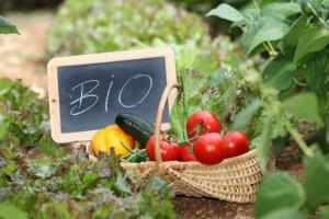 Ekologiczna żywność gorsza dla klimatu niż ta produkowana konwencjonalnie