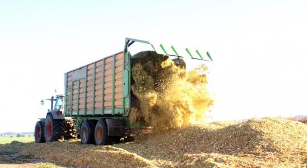 Jakich odmian kukurydzy szukają rolnicy?